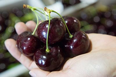 Pre-order Cherries